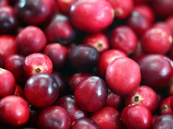 Cranberries20101210.jpg