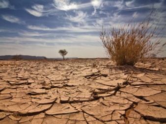 desert-1108-lg.jpg